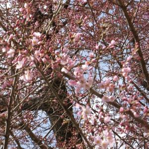春の箕面・鉢伏山へ