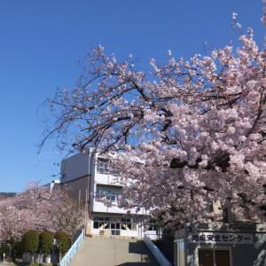 箕面山麓 桜巡り
