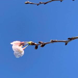奇跡の春へ!