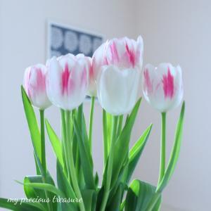 ⋆⋆お庭で見つけた小さな春♬カルディでも見つけてきました♬⋆⋆