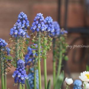 ⋆⋆初春のお庭とカルディの美味しいあられ⋆⋆