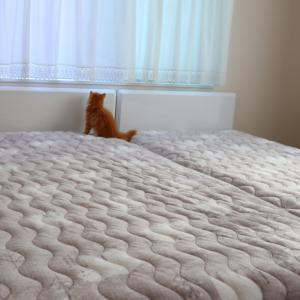 ⋆⋆【寝室】ニトリやしまむらよりも安く買えた寝具品⋆⋆