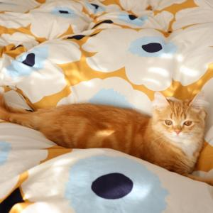 ⋆⋆【午後の寝室】大切なマリメッコの上を駆け回る猫⋆⋆