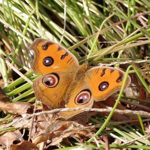 12月の蝶たち