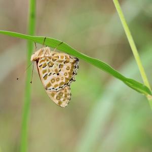 目覚め前の蝶