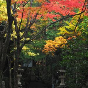 見ごろを迎えた三滝寺。