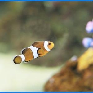 世界の淡水・海水魚展2