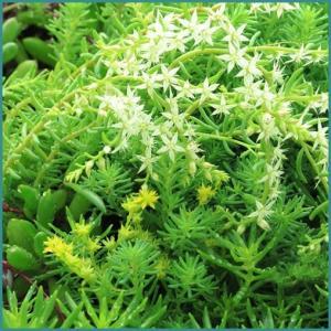 多肉植物24(ぶっこみ鉢の多肉たち)