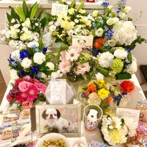 お花が沢山♡
