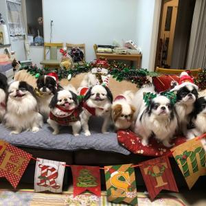 メリークリスマス\(^o^)/