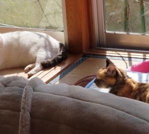 「これからも・・・・」続けて欲しい猫CM☆