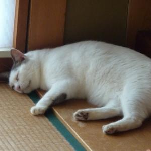 猫が居るっ!!・・・「クラフトボス」覚えました♪