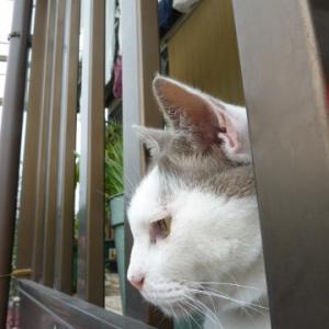 宅配に慌て、チャーの別の顔が見られた「旅猫リポート」に感動♡