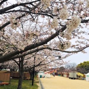 5分咲き〜(^_^)in舞鶴公園