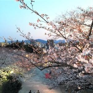 福岡 西公園の桜~