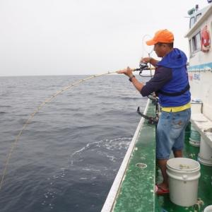コマセマダイ釣り攻略法 −電動巻きやり取り編−