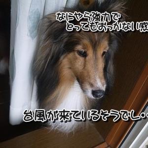 台風が来ています