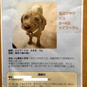 迷い犬情報求む