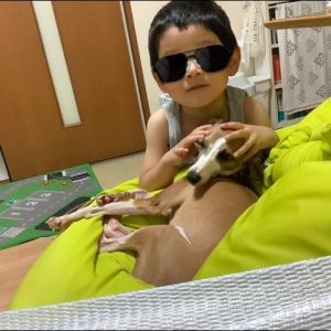 高熱と息子と犬