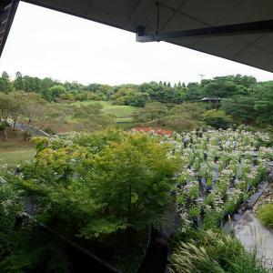藤袴と和の花展@梅小路公園朱雀の庭