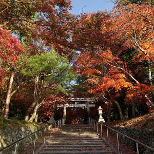 2018京都の紅葉・大原野 大原野神社