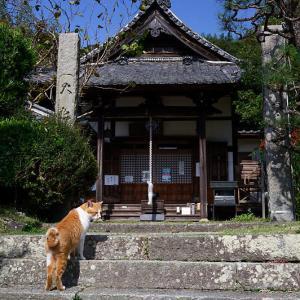 町角ニャンコ・とあるお寺のニャンコ