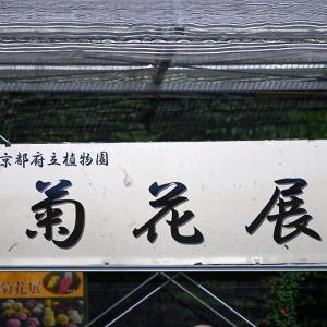 菊花展@府立植物園