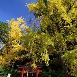 2018京都の紅葉・小野郷 岩戸落葉神社