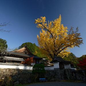 2019京都の紅葉・千代川 寳林寺