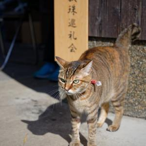 2019京都の紅葉・篠山 大國寺