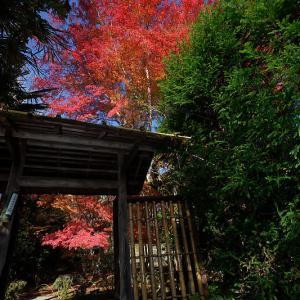 2018京都の紅葉・上高野 栖賢寺