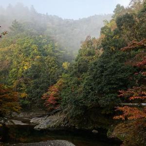 2019京都の紅葉・高雄 西明寺