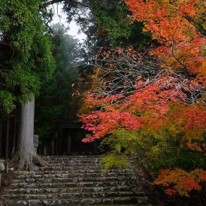 2019京都の紅葉・京北町 常照皇寺 其の一