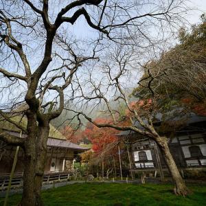 2019京都の紅葉・京北町 常照皇寺 其の二