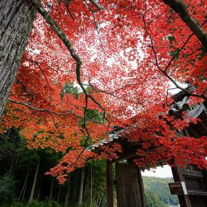 2019京都の紅葉・園部 龍穏寺