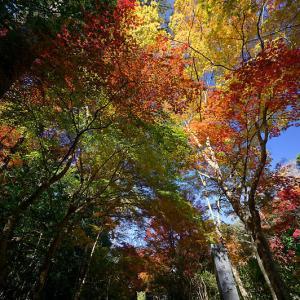 2019京都の紅葉・亀岡 内緒のお寺 其の一