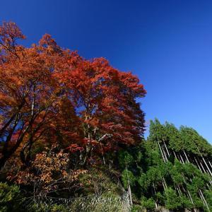 2019京都の紅葉・小野郷 内緒のお寺