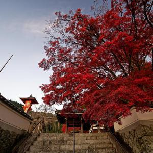 2019京都の紅葉・洛西 善峯寺 其の二