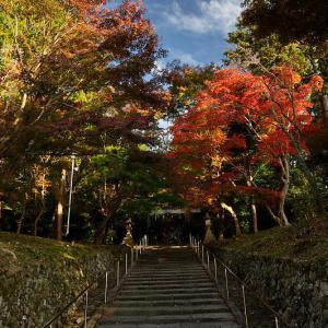 2019京都の紅葉・洛西 大原野神社