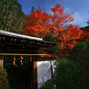 2019京都の紅葉・洛西 金蔵寺 其の二