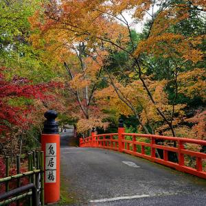 2019京都の紅葉・泉涌寺 今熊野観音寺