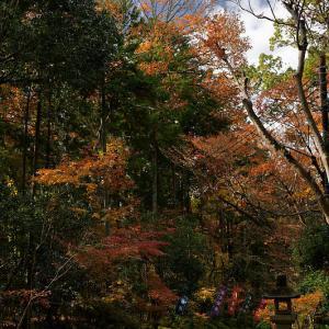 2019京都の紅葉・修学院 赤山禅院