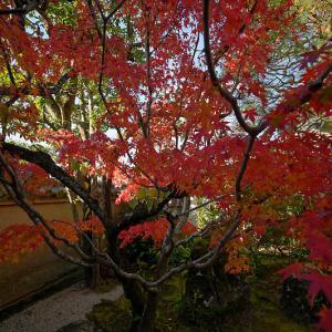 2019京都の紅葉・花園 妙心寺塔頭桂春院