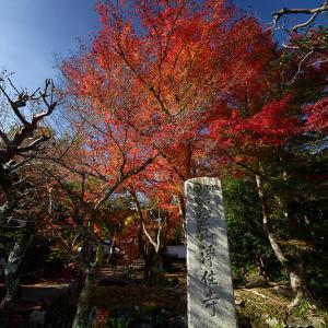 2019京都の紅葉・上桂 浄住寺
