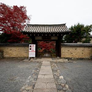 2019京都の紅葉・嵯峨 鹿王院