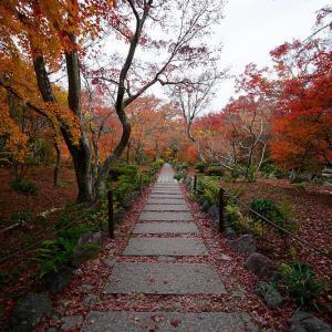 2019京都の紅葉・嵯峨野 宝筐院
