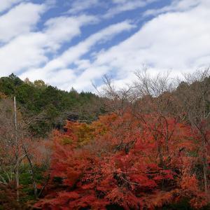 2019京都の紅葉・衣笠 竜安寺 其の一