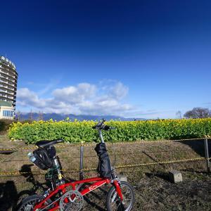 5LinksでGo~! 寒咲き菜の花@守山 なぎさ公園