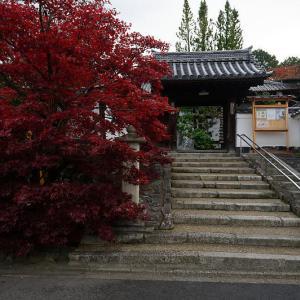 2019京都の紅葉・東福寺 光明院