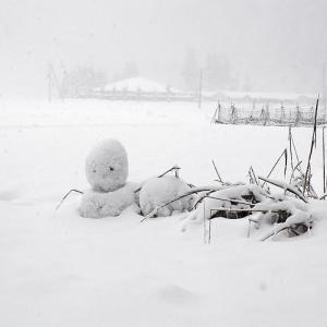寒波到来!待望の雪景色@美山茅葺きの里 其の二
